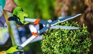 Gardening service in dubai