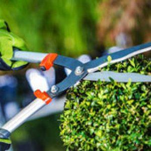 Gardening service in UAE - Helpire