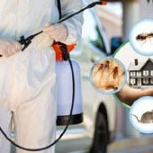 Pest Control service in UAE - Helpire